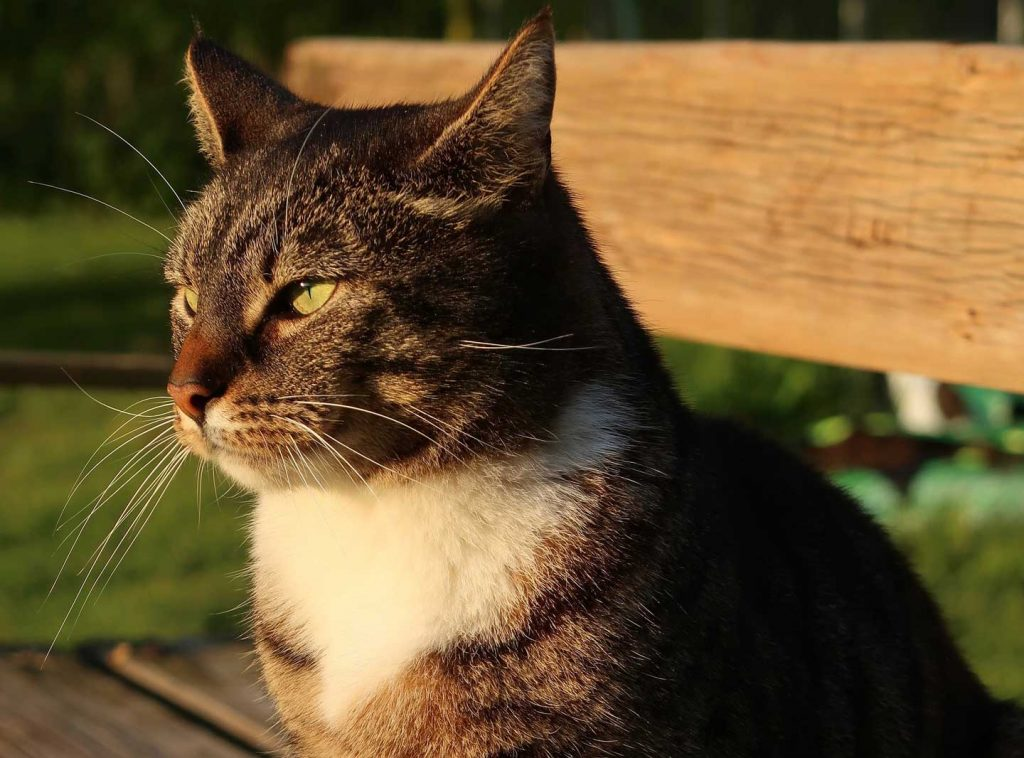 cat sitting on a bench looking at sun at dusk