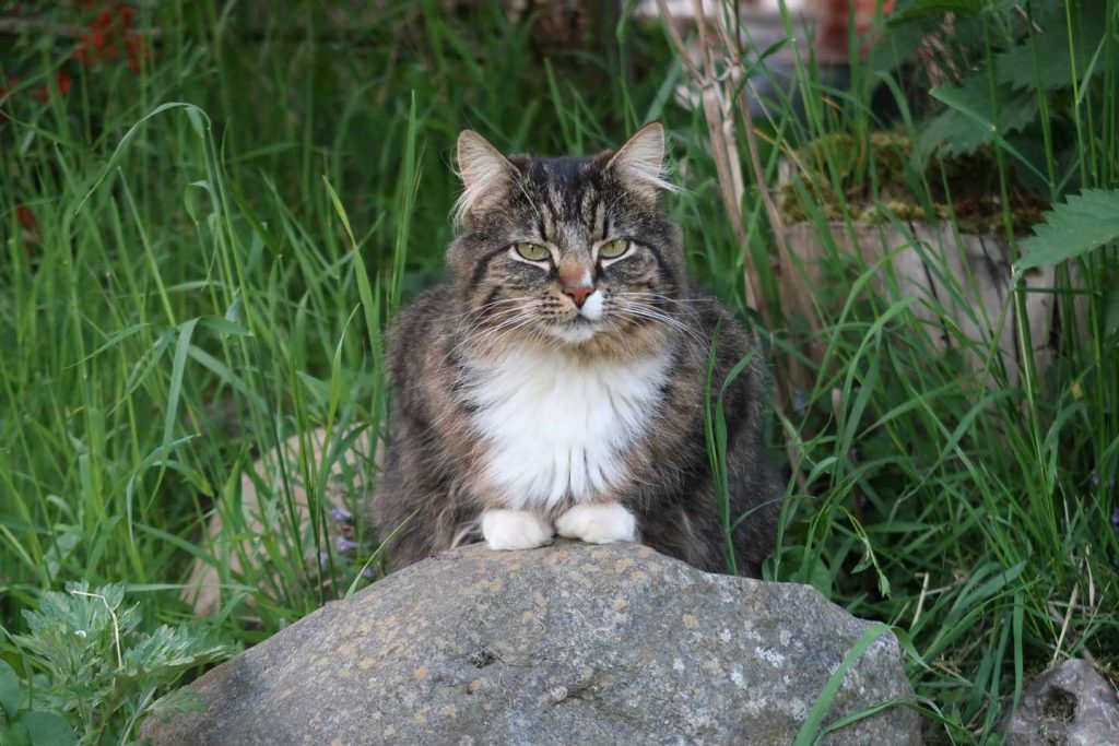 cat sitting on a rock with green foliage backdrop