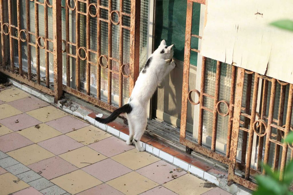hungry cat trying to get into a building