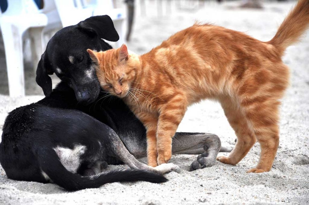 black dog and ginger cat