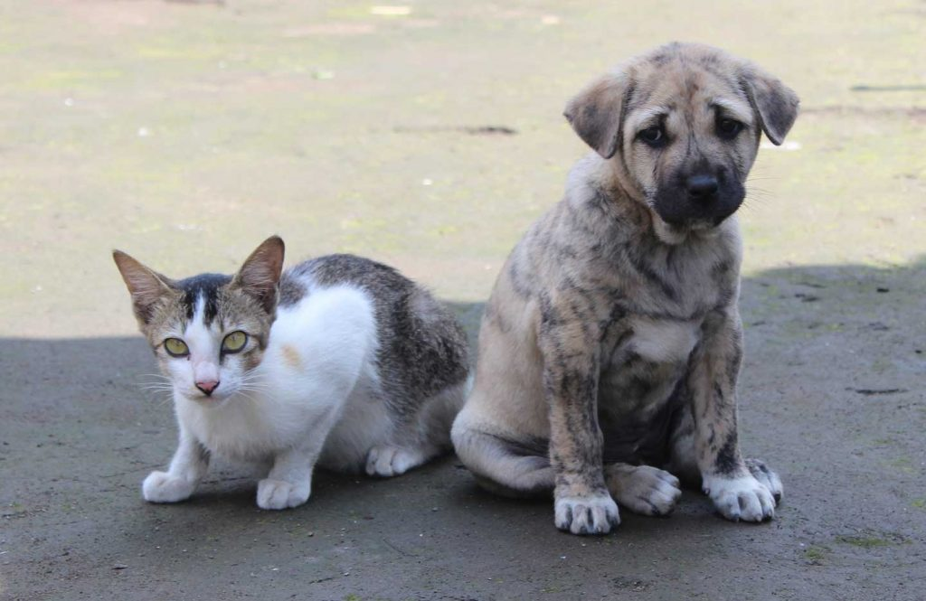kitten and puppy standing next to each other