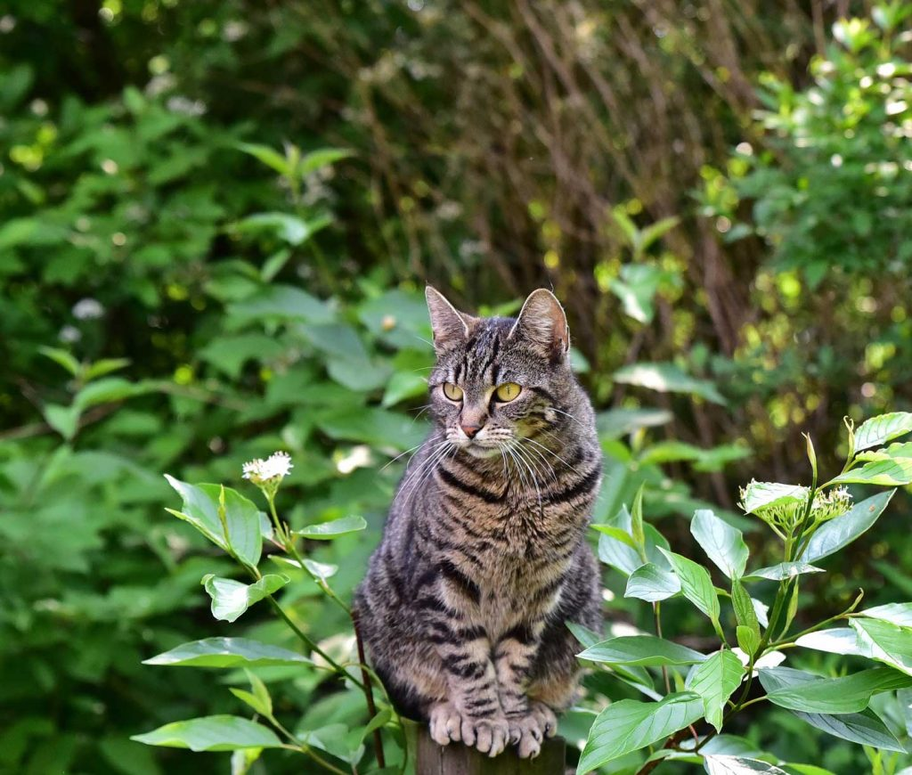 cat sitting among foliage